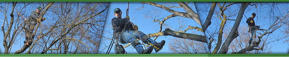 Safety Harness Tree Trimming