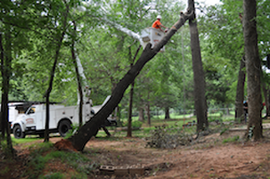Tree Removal in Kettering, OH