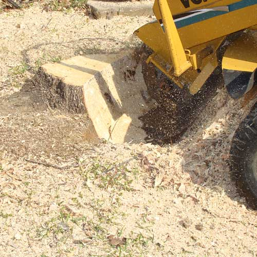 Stump Grinding in Centerville