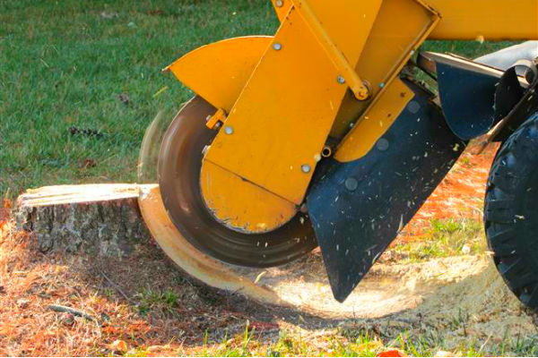 Stump Grinding with Vermeer