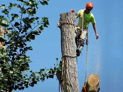 Tree Service Dayton OH Tree Removal