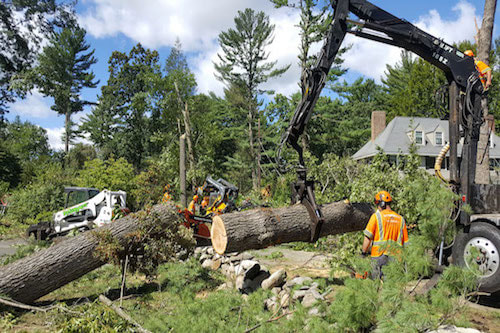Tree Removal in Waynesville