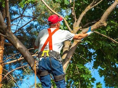 Tree Trimming with Tree Service Dayton
