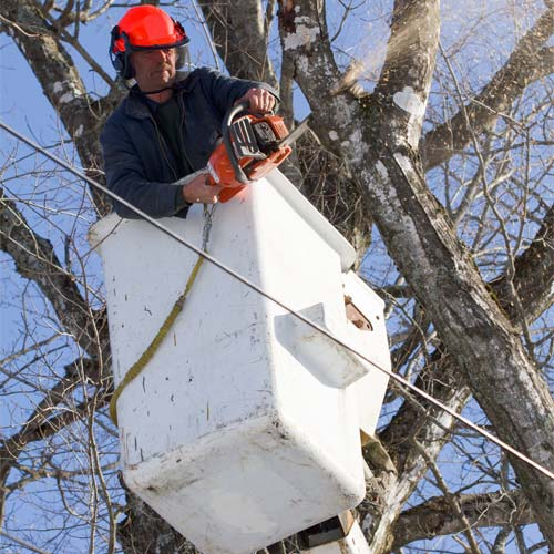 Tree Trimming in Kettering