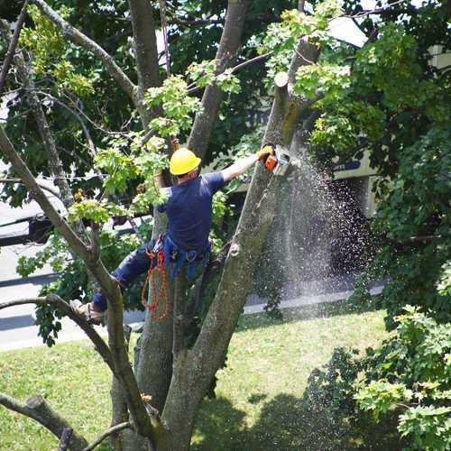 Tree Trimming in Oakwood