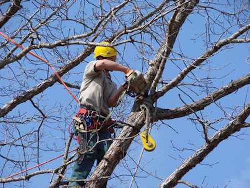 Tree Trimming by Tree Service Dayton OH